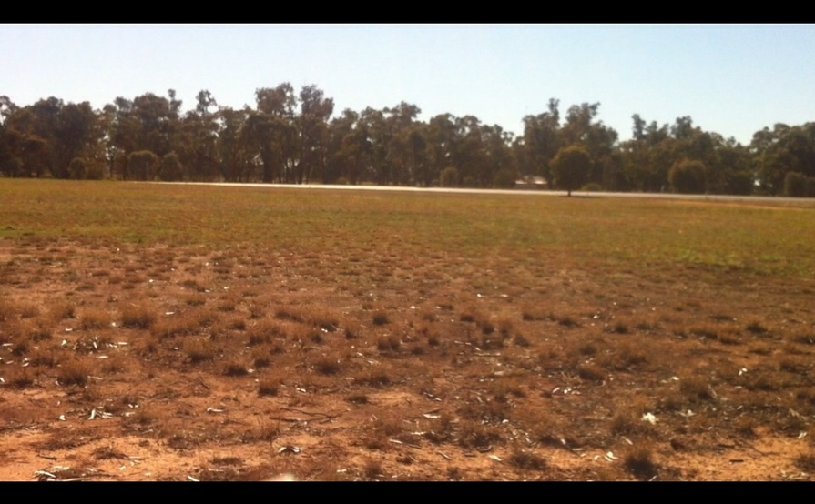 Wide, flat-grassed space perfect for Caravan in Ungarie near West Wyalong #1