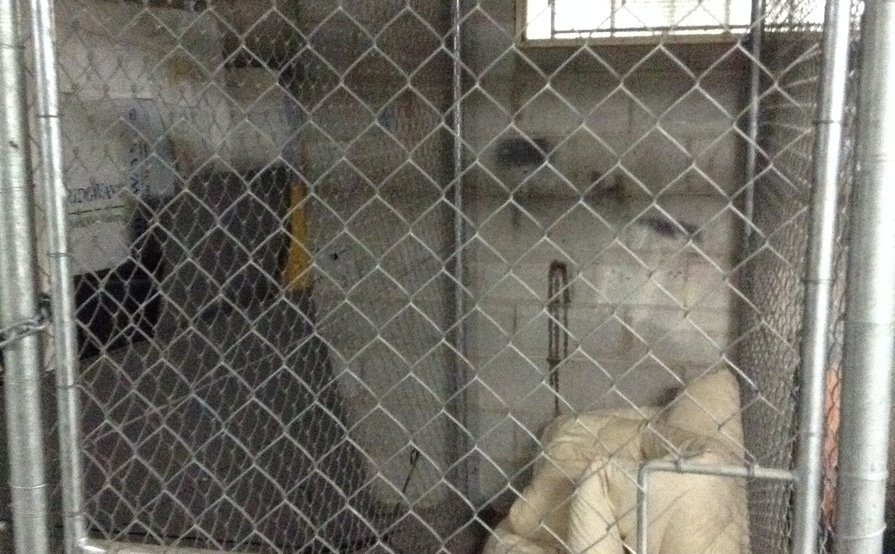 Storage Cage for lease