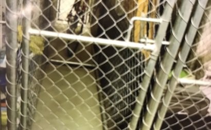 Port Melbourne Storage cage