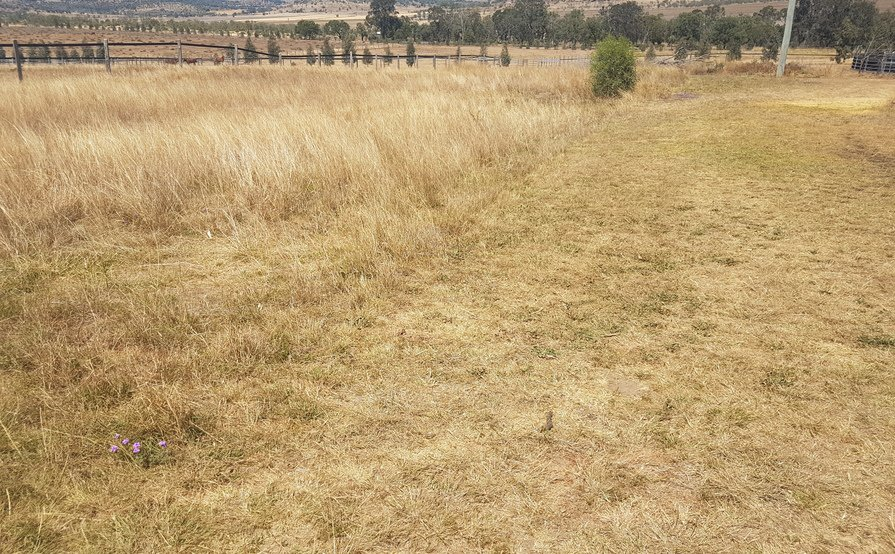 Gowrie Little Plain QLD - 50 acres land for Boat ion a Trailer